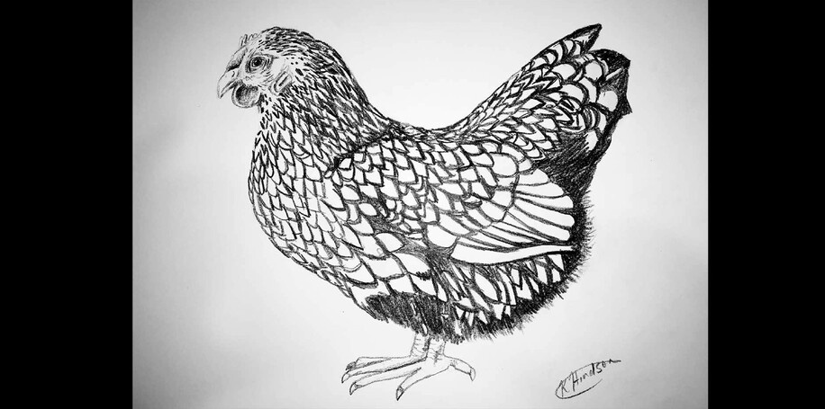 PENCIL SKETCH  - SILVER LACED WYANDOTTE
